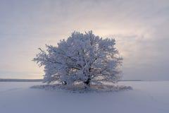 Красивейшее изображение зимы landscape сиротливое покрытое снег дерево в поле стоковое изображение rf