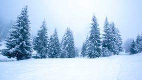 Красивейшее изображение зимы landscape акции видеоматериалы