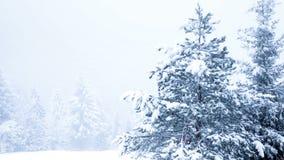 Красивейшее изображение зимы landscape сток-видео