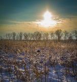 Красивейшее изображение зимы landscape Стоковые Изображения