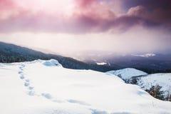 Красивейшее изображение зимы landscape стоковая фотография