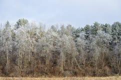 Красивейшее изображение зимы landscape Стоковые Изображения RF