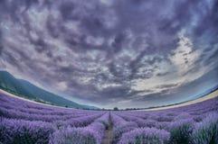 Красивейшее изображение поля лаванды стоковая фотография rf