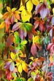 Красивейшее листво осени Стоковое Изображение