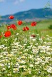 красивейшее лето горы ландшафта цветков Стоковое Изображение