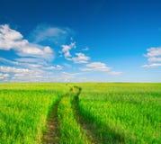 красивейшее лето ландшафта Стоковые Фото