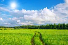 красивейшее лето ландшафта Стоковая Фотография