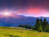 красивейшее лето ландшафта Стоковая Фотография RF