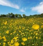 красивейшее лето поля стоковые изображения rf