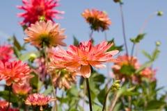 красивейшее лето сада цветков Стоковые Фотографии RF