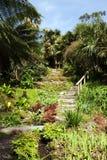 красивейшее лето сада Стоковые Фото