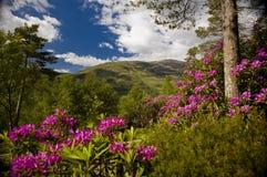 красивейшее лето Шотландии Стоковое Изображение RF
