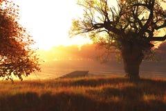 Красивейшее место 3D природы озера осен представляет 1 Стоковые Фото