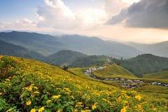 красивейшее место florals Стоковое Изображение