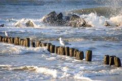 красивейшее море Стоковое Изображение