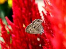 красивейшее насекомое Стоковая Фотография RF