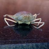 красивейшее насекомое Стоковая Фотография