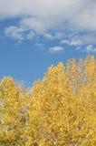 красивейшее падение дня Стоковая Фотография RF