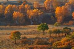 красивейшее падение Стоковая Фотография RF