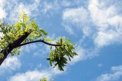 красивейшее пасмурное небо Стоковые Изображения RF