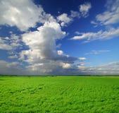красивейшее поле дня солнечное Стоковое Изображение RF