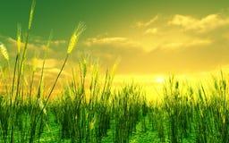 красивейшее поле над пшеницей захода солнца Стоковое фото RF