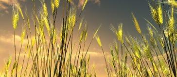 Красивейшее поле пшеницы иллюстрация вектора