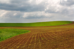 красивейшее поле сельской местности Стоковое Изображение RF
