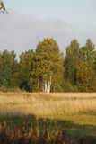 красивейшее поле Стоковые Фотографии RF