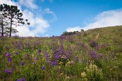 красивейшее поле 3d цветет изображение стоковая фотография rf