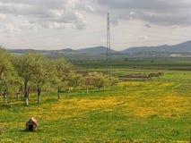 красивейшее поле одуванчика цветет весна стоковые фотографии rf