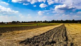 красивейшее поле Стоковое Фото