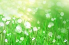 красивейшее свежее утро света травы отражает Стоковая Фотография RF