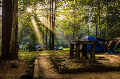 красивейшее светлое утро Стоковые Фотографии RF