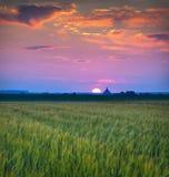 красивейшее село захода солнца лета Стоковое Изображение