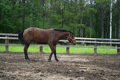 красивейшее село лошади Стоковое фото RF