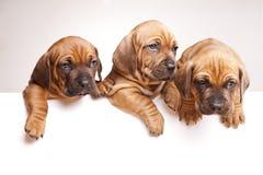 красивейшее сообщение собак посылает Стоковые Изображения RF