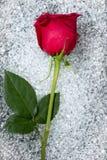 красивейшее стекло одно над текстурой розы круглой Стоковая Фотография RF