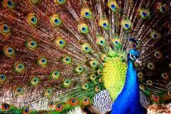 красивейшее уродское Стоковая Фотография RF