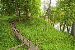 красивейшее утро зеленого цвета пущи стоковое изображение rf