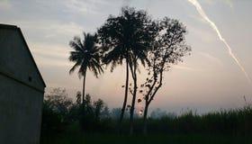 Красивейшее утро Стоковые Изображения RF