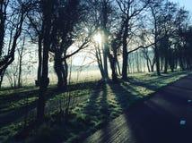 Красивейшее утро Стоковое Фото