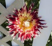 красивейшее цветение Стоковая Фотография
