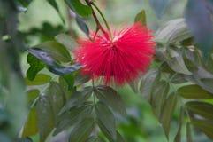 красивейшее цветение Стоковая Фотография RF