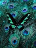 красивейшее экзотическое загадочное Стоковые Изображения