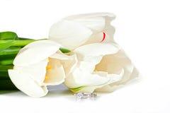Красивейшие белые тюльпаны весны и кольцо диаманта Стоковое Фото
