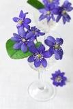 красивейшие голубые цветки стоковое изображение rf