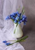 красивейшие голубые цветки Стоковые Изображения RF