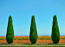 Красивейшие деревья и цветки в Bahai садовничают Стоковая Фотография