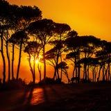 Красивейшие деревья на заходе солнца Стоковое Изображение RF